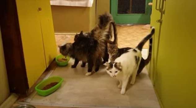 Животные Московского и других зоопарков остро переживают отсутствие посетителей на карантине  Интересное