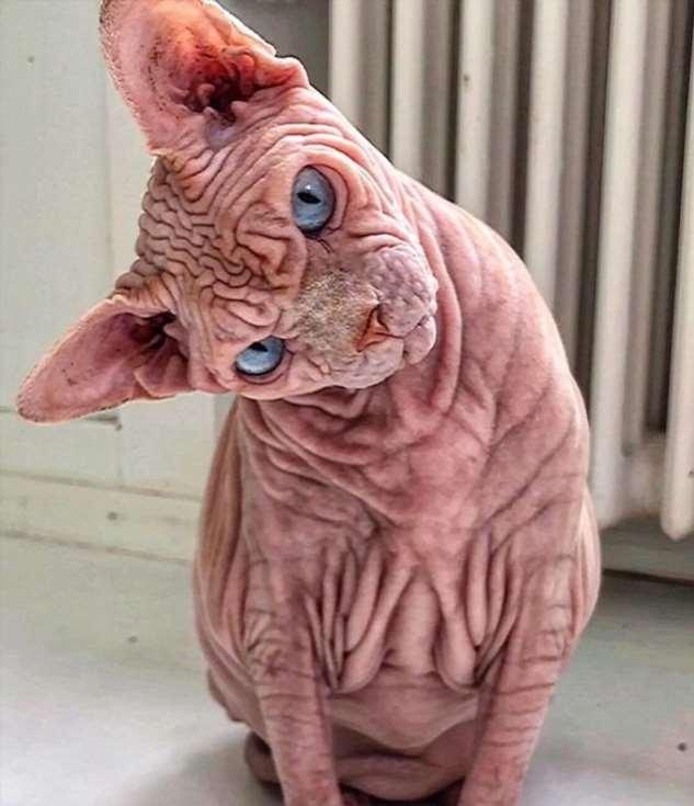 Ксердан — самый страшный кот в мире Интересное