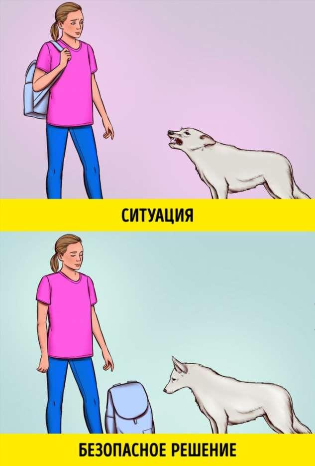 Правила поведения при встрече с бродячим псом, которые однажды могут спасти вам здоровье и даже жизнь