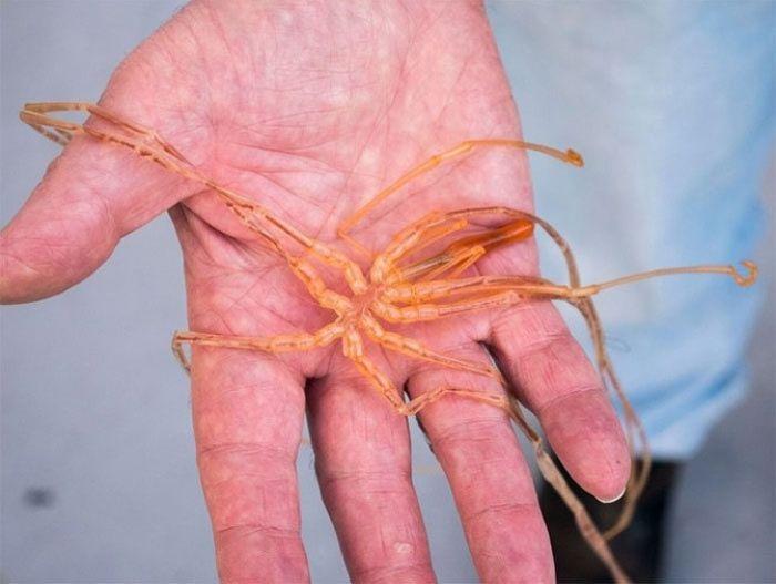 10 необычных существ, обитающих у побережья Австралии