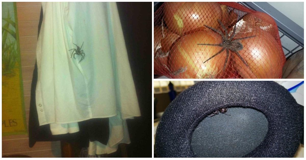 22 доказательства, что от пауков не скрыться
