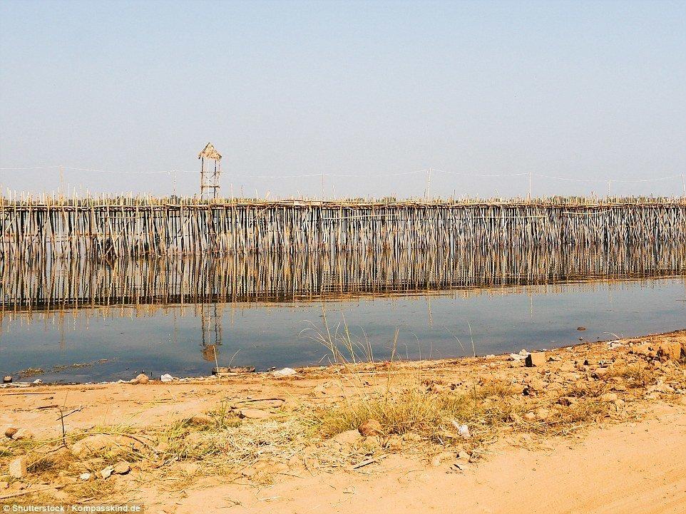 Шедевральный 300-метровый бамбуковый мост в Камбодже каждый год разбирают и строят заново